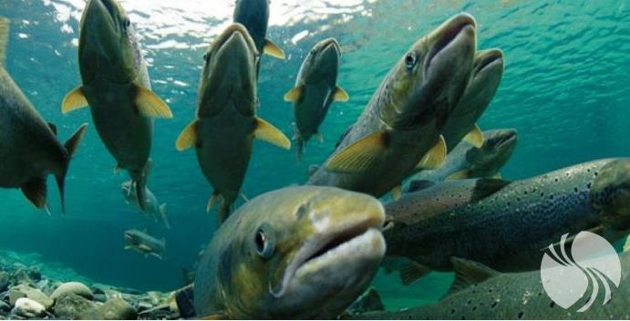 鱼类.png