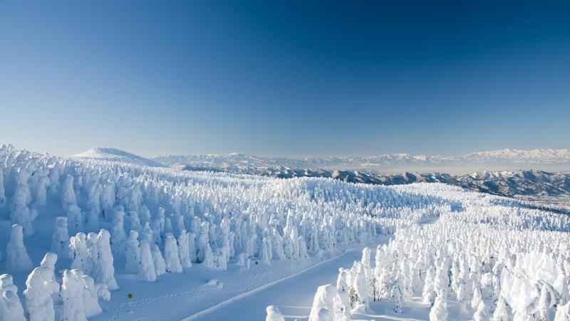 森林雪景.jpg